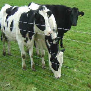 Cattle fence and fixed knot field fence & hinge joint field fencing